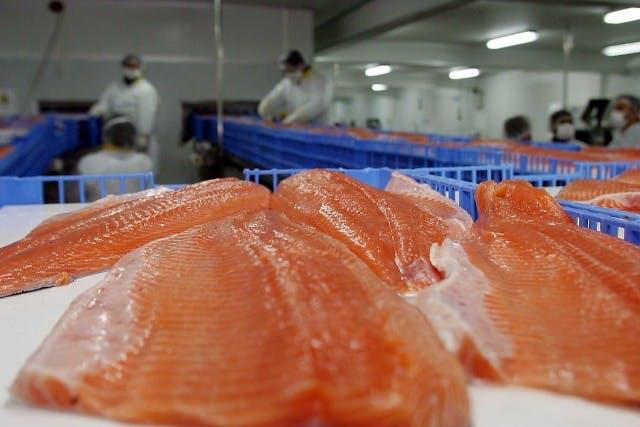 Sernapesca y bloqueo de salmones en Rusia: (La situación) afecta a varios países. También han bloqueado plantas de Noruega